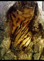 Tree Trunk by OrchidGrpahics