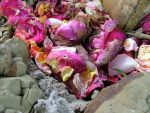 Compost is Poetry by Silken-Raider