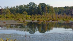 Swamp Reflections 9-26-12 by Tailgun2009