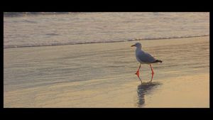 Seagull by c-lue