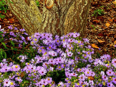 Purple Flowers At Base Of Tree by rodwilliams