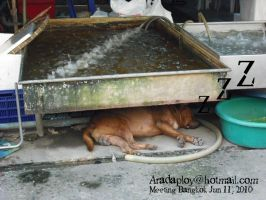 Dog sleeping under the shrimp sink by anemoneploy
