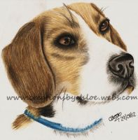 Beagle Puppy by ItsCloctorArt