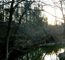 Bare Forest and Creek by dazzleflash