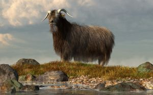 Shaggy Goat by deskridge