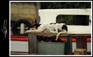 Dog Tired by ODRA2006