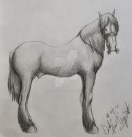 horse by Industriealptraume