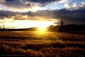 Sunset over a field by Miriam-Hiromi