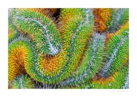 Colorful Cactus by MBKKR