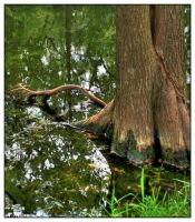 Tree in Water by shawn529