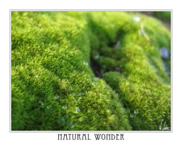 Natural Wonder by NEME5IS