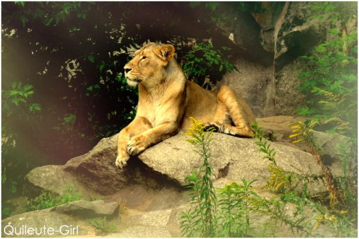 Lion by quileute-girl