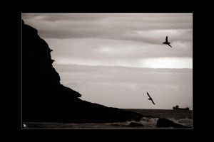 flight of the Puffins by kilted1ecosse