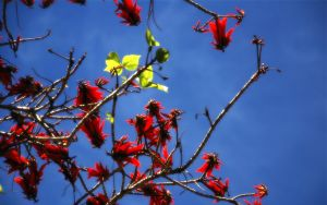 Colourful Branch Wallpaper by Morillas