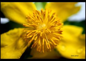 strong yellow by Zlata-Petal