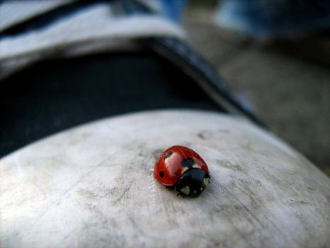 Lady bird on chucks by Tigerente-in-love