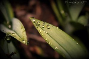 Spring Drops by Miranda-Doughty