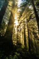 Forest Sunray by 5isalive