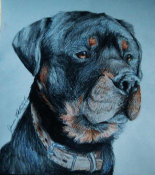 Mr. Rottweiler by Jaylynessa