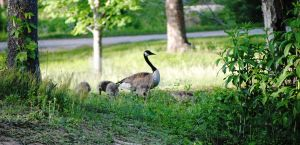 Mother Goose by hope-on-fire