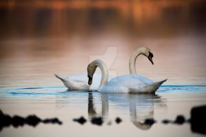 Swan lake by Perseus67