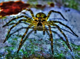 Spider by Stone1980