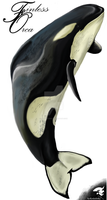 Finless Orca Colour by SyKoticOrKa