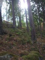 Mossy Forested Hillside by Aixchel