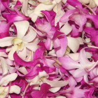 Pink and White Edible Flowers by FantasyStock