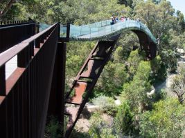 Treetop walk in Kings Park, Perth by dottys-friend