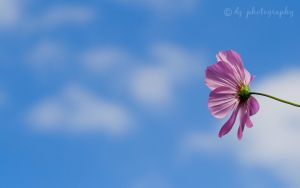 Flower in the Sky 5031WP by DG-Photo