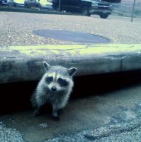 The Racoon In The Sewer by toyflamethrower1
