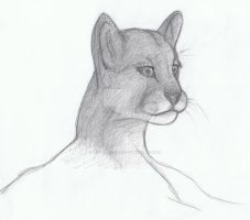 Shading Cougar by ElectricVISUALS