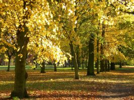 London Leaves 2451053 by StockProject1