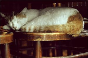 The Sleeper Cat :. by estellamestella