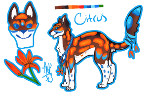 **Citrus Reference Sheet by Kama-ItaeteXIII