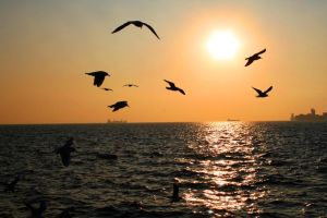 Seaguls travelling by photofenia
