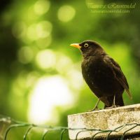 On the lookout by TammyPhotography