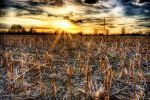 Broken Maize Field by d67