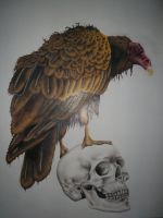 Vulture and skull by the-jabber-wocky