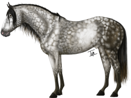 Baachus by TamHorse
