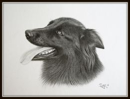 Shepherd in graphite by IngeLammers