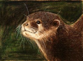 Oriental Small-clawed Otter by Benalene