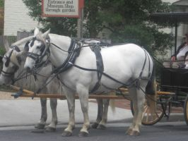 Around the old town 16  horses by fluffyfangedfriends