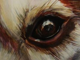 The eye of husky II by ahsr