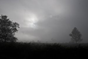 Early Morning Mist (BaW) by DemonsWrathPhotos