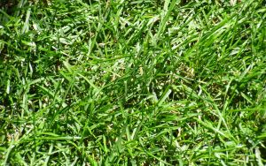 Grass 1920x1200 by Seph-the-Zeth