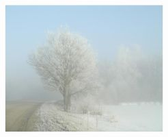Scenes of winter morning_Tree by NorthernGirl777