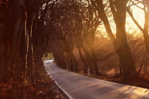 sunny road by sys66