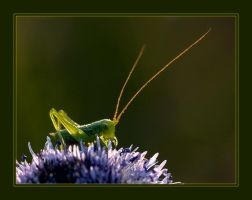 Mini Grasshopper by vikingexposure